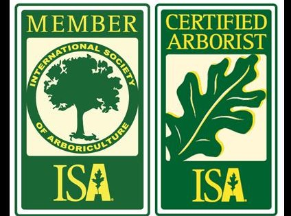 How to Become a Certified Arborist