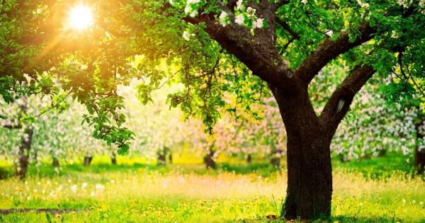 The Secret Benefits of Trees