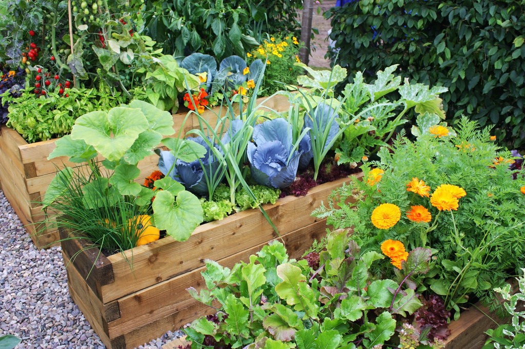 elite-vegetable-gardening-vegetable-garden